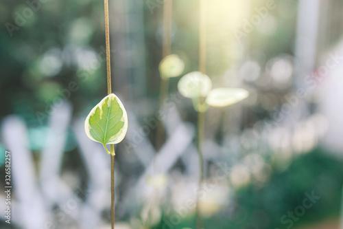 Photo hanging leaf