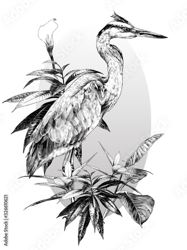 egret stands full-length sideways and looks away composition in an oval painted Canvas Print