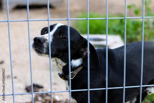Obraz smutny pies zamknięty kraty płot - fototapety do salonu