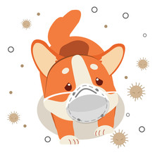 The Character Of Cute Corgi Dog Wear A Mask With Dust On The White Background. The Character Of Cute Corgi Dog Look Sad And Sick Because Dust. The Character Of Cute Dog In Flat Vector Style.