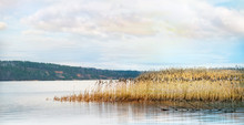 Panoramic View Of The Lake With Cattails In Autumn