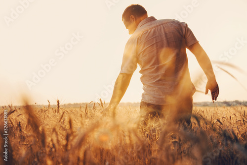 Leinwand Poster Man walking in wheat during sunset and touching harvest.