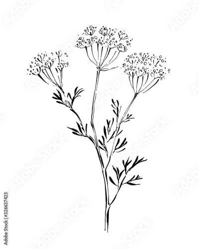 Line drawing of anise on white background Wallpaper Mural