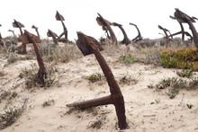 Rusty Old Anchors On The Beach At The Anchor Cemetary Graveyard At Praia Do Barril Beach, In Tavira, Algarve, Portugal