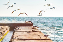 Seagulls Fly Over The Pier On ...