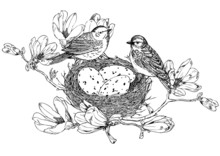 Magnolia Branches With Birds, Nest And Eggs