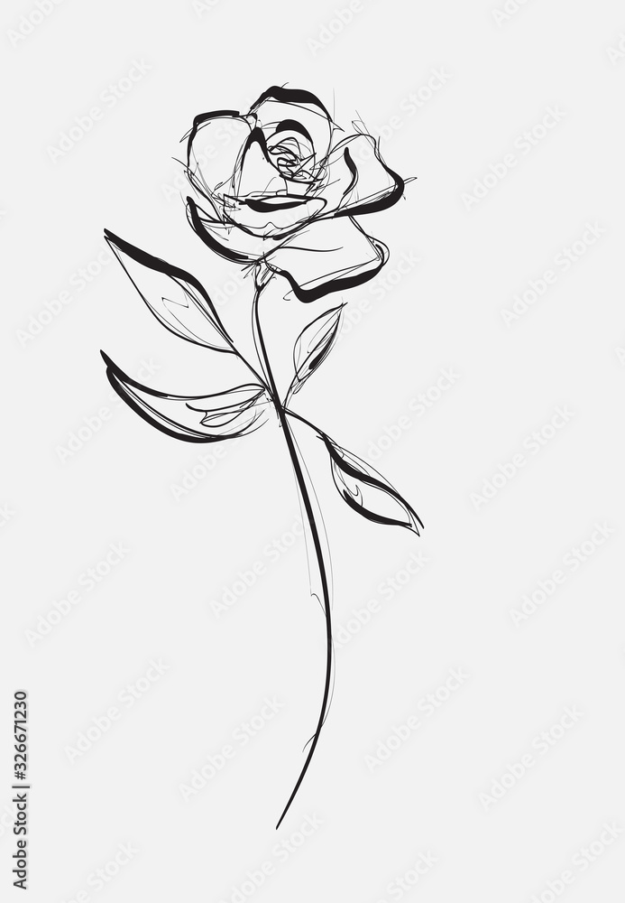 Fototapeta Flower Rose, sketch, painting. Hand drawing. White bud, petals, stem and leaves. Monochrome, Black and white illustration.