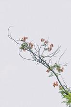 亜熱帯の木の花 Processed With VSCO With Kp1 Preset