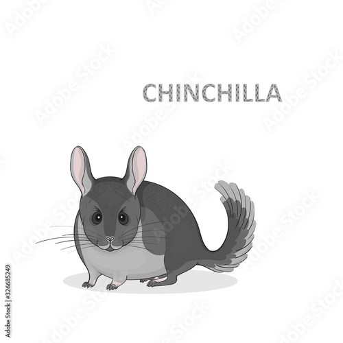 Vector illustration, a cartoon cute grey chinchilla, isolated on a white background Wallpaper Mural