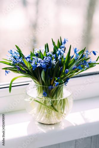 Fototapeta Spring bouquet of blue snowdrops in a vase obraz na płótnie