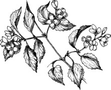Hand Drawn Monochrome Vector M...
