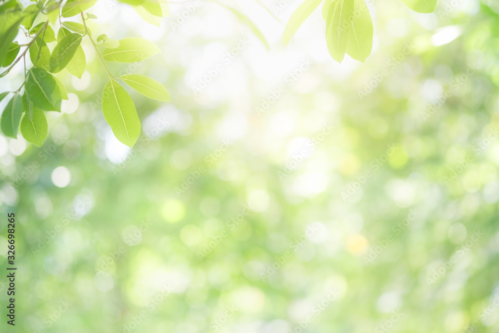 Fototapeta Beautiful nature view of green leaf on blurred greenery background in garden and sunlight with copy space using as background natural green plants landscape, ecology, fresh wallpaper concept.