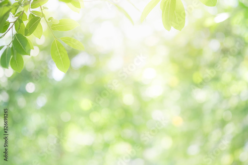 Obraz Beautiful nature view of green leaf on blurred greenery background in garden and sunlight with copy space using as background natural green plants landscape, ecology, fresh wallpaper concept. - fototapety do salonu