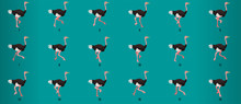 Ostrich Run Cycle Animation Se...