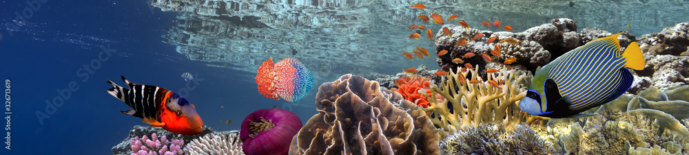 Fototapeta Coral reef underwater panorama with school of colorful tropical fish