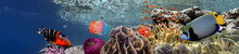 Coral Reef Underwater Panorama...