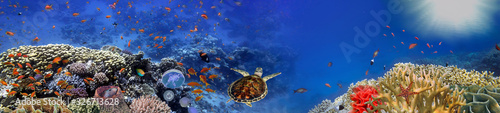 Underwater panorama with turtle