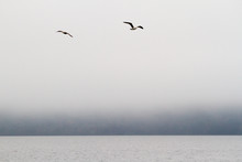 Seagulls Fly In The Silent Fog On The Lake