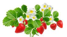Fresh Strawberries On White Ba...