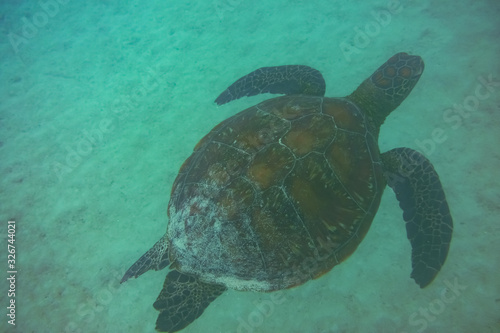 The beauty of swimming with sea turtles underwater, Santiago Island, Galapagos I Canvas Print