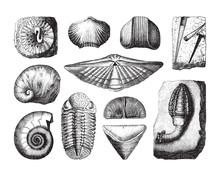 Shell Fossil Collection (Devonian Period) / Vintage Illustration From Brockhaus Konversations-Lexikon 1908