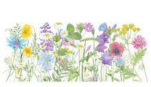 Watercolor Hand Drawn Floral Summer Border With Wild Meadow Flowers (clover, Bluebell, Cornflower, Tansy, Chamomile, Cow Vetch, Poppy, Dandelion) And Grass, Composition Isolated On White Background