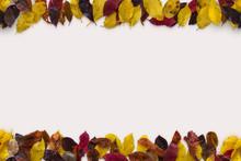 Autumn Color Leaves Mix Mockup...