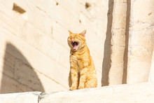 Yawning Cat Among Ruined Columns Of The Acropolis Of Athens In Greece.