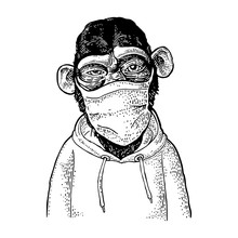 Monkey Dressed In The Hoodie And Mask.Vintage Engraving