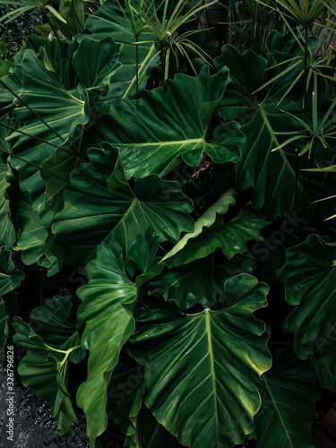 green leaves background - 326796826
