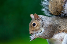 Squirrels With Lush Green Bokeh