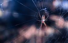Colorful Spider In Its Cobweb