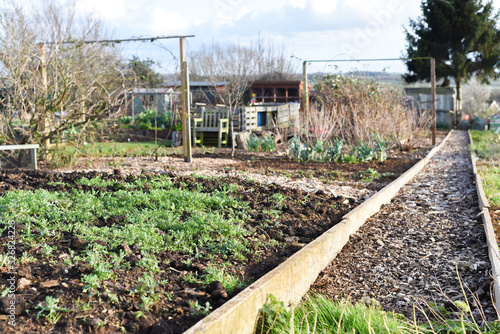Allotment plot or community garden shared by multiple owners to grow your own ve Wallpaper Mural