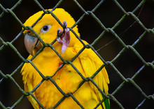 Macaw Parrot Found