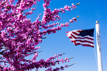 Pink Cherry Blossoms And American Flag Against Bright Blue Sky