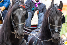 Horse Parade At The Party Of The Three Tombs In Igualada, Barcelona