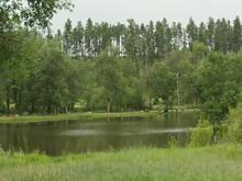 Legion Lake At Custer State Pa...