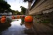 Apfelsinen auf dem Boden.