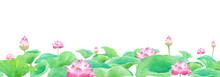 蓮の花、水平方向のシ...
