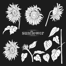 .A Set Of Sunflowers Silhouett...