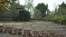 White Heron Perched On A Wooden Bench Grandstand