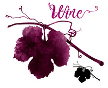 Illustration Of Vine With Tend...