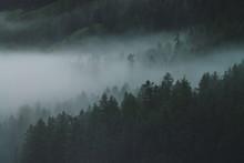 Low Cloud In Alpine Dark Fores...