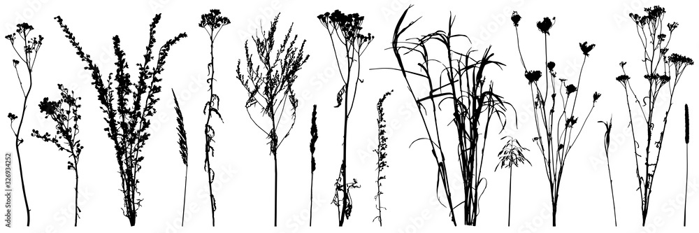 Fototapeta Set of wild plants and weeds, silhouettes. Vector illustration.