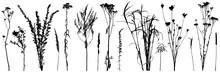 Set Of Wild Plants And Weeds, ...