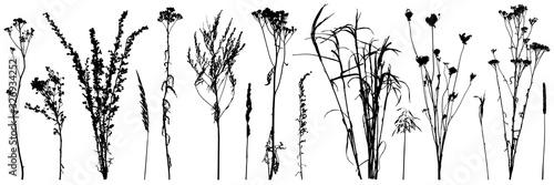 Valokuvatapetti Set of wild plants and weeds, silhouettes. Vector illustration.