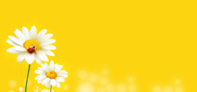 Modern Beautiful Daisy Ladybug On Yellow Background