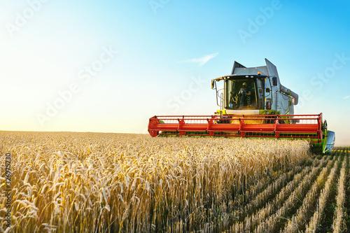 Foto Combine harvester harvests ripe wheat