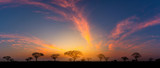 Fototapeta Sawanna - Panorama silhouette tree in africa with sunset.Tree silhouetted against a setting sun.Dark tree on open field dramatic sunrise.Typical african sunset with acacia trees in Masai Mara, Kenya