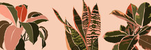 Art Collage Houseplant Leaves In A Minimal Trendy Style. Silhouette Of Sansevieria, Spathiphyllum And Ficus Plants In A Contemporary Simple Abstract Style On A Pink Background. Vector Illustration